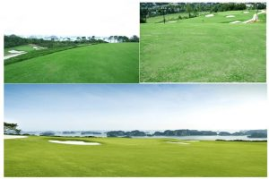 Khu vực sân Golf FLC hạ Long